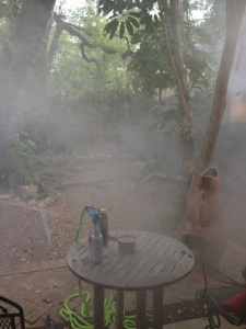 Mosquito fogging excitement
